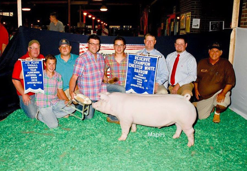 4th Overall Barrow & Reserve Champion Chester White Barrow, 2016 Team Purebred Junior Show - Lane Rinderer
